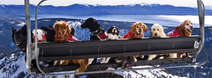 SQUAW DOGS