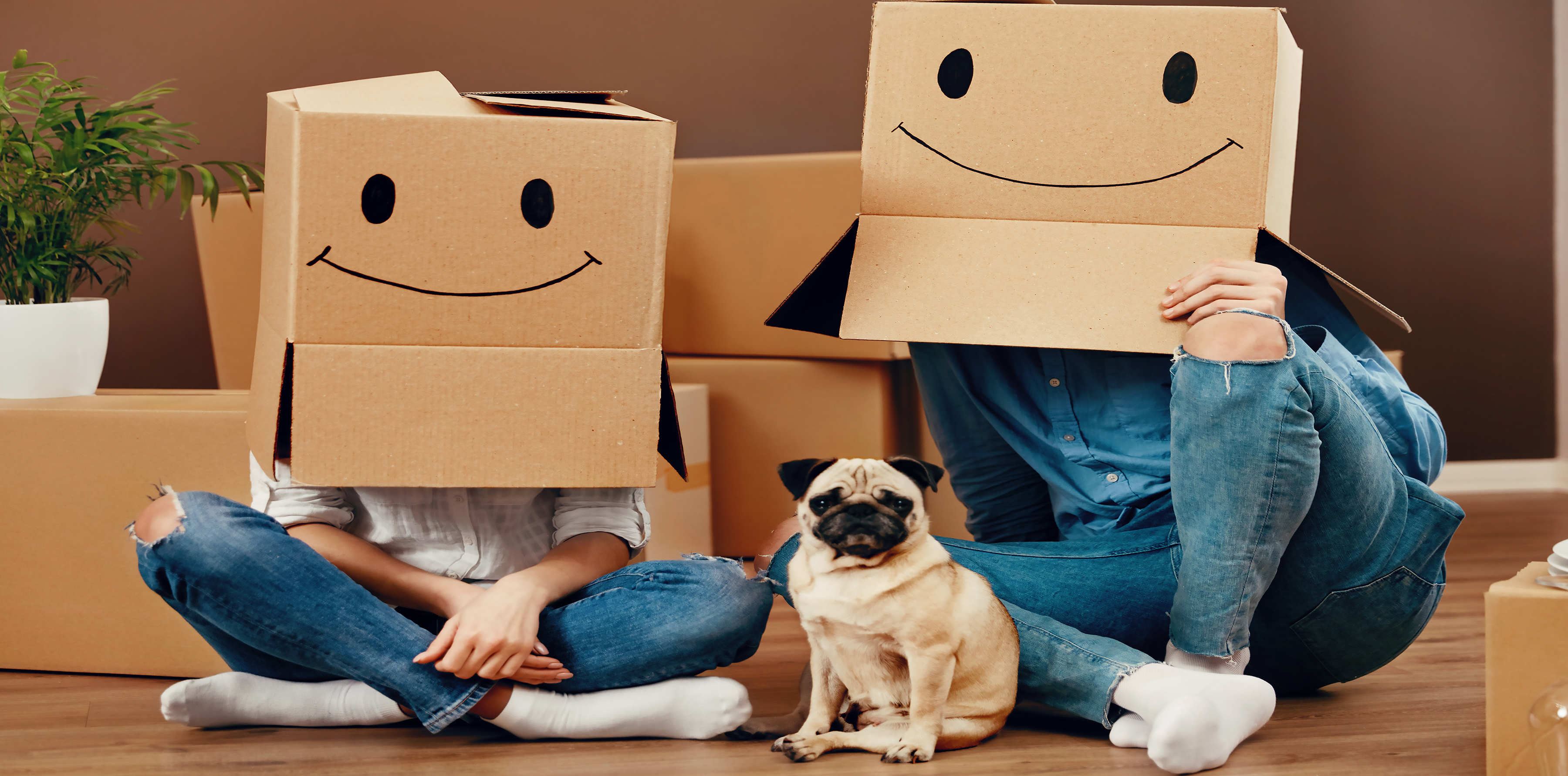 PG Home Buyers Boxes Dog